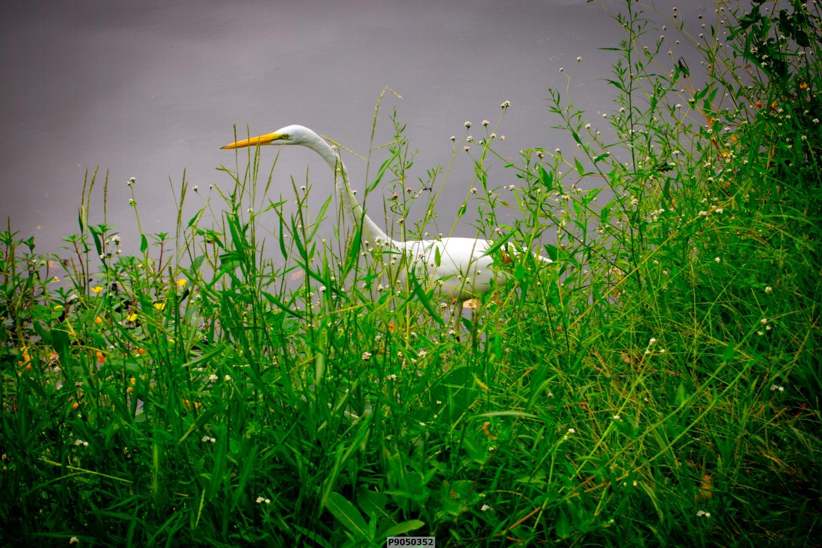 Overcast Crane-002.jpg