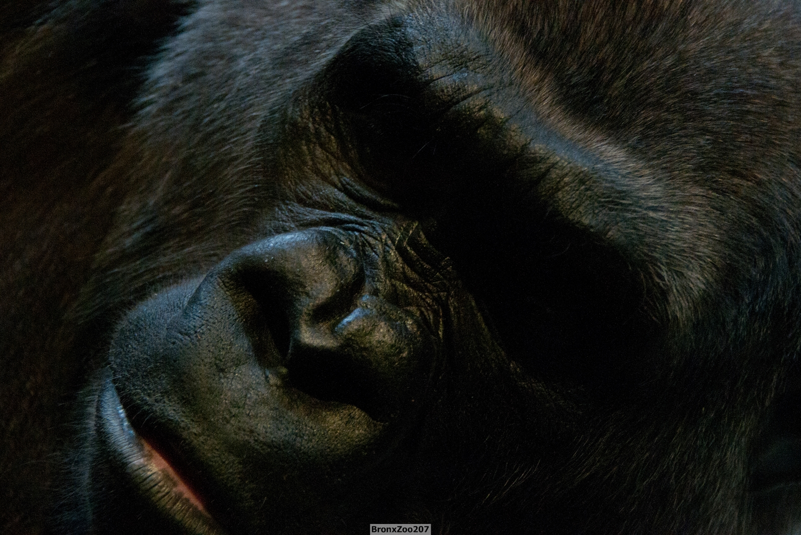 Gorilla04-004.jpg