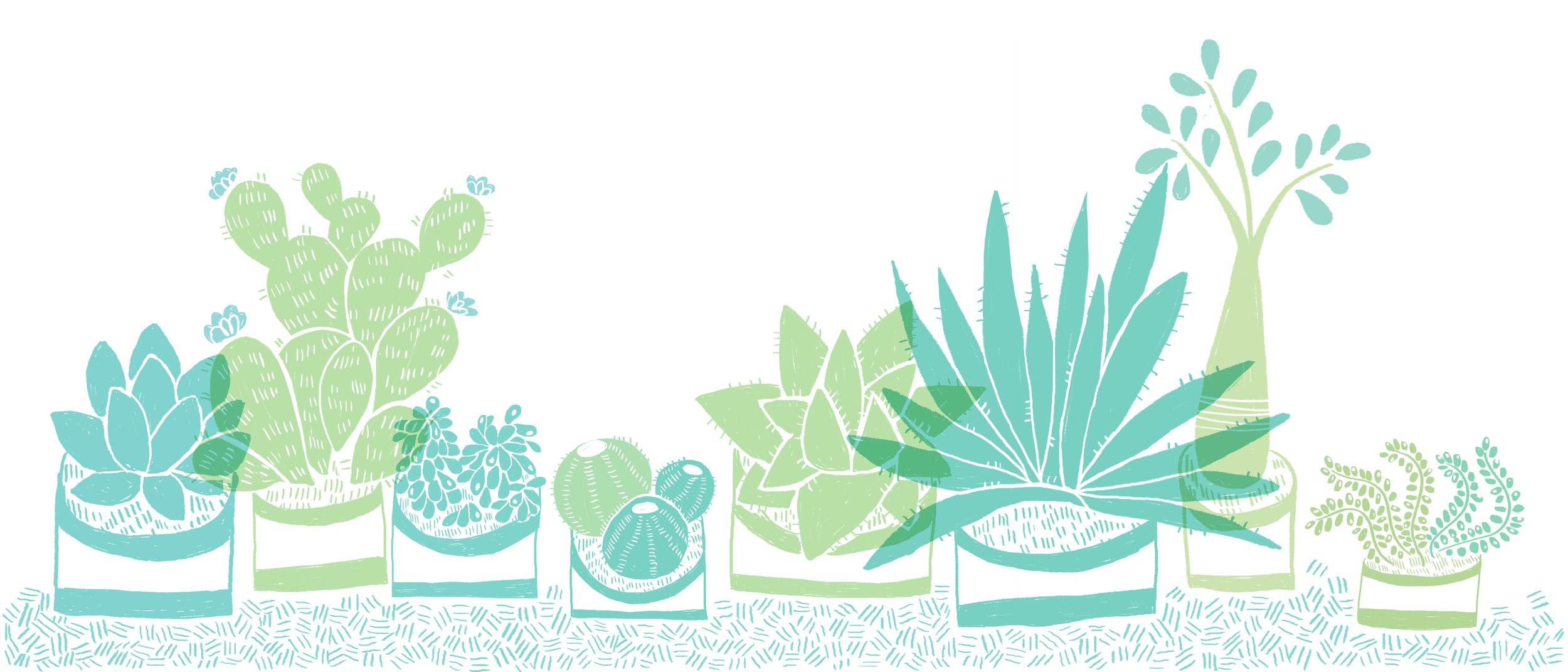 succulents together.jpg