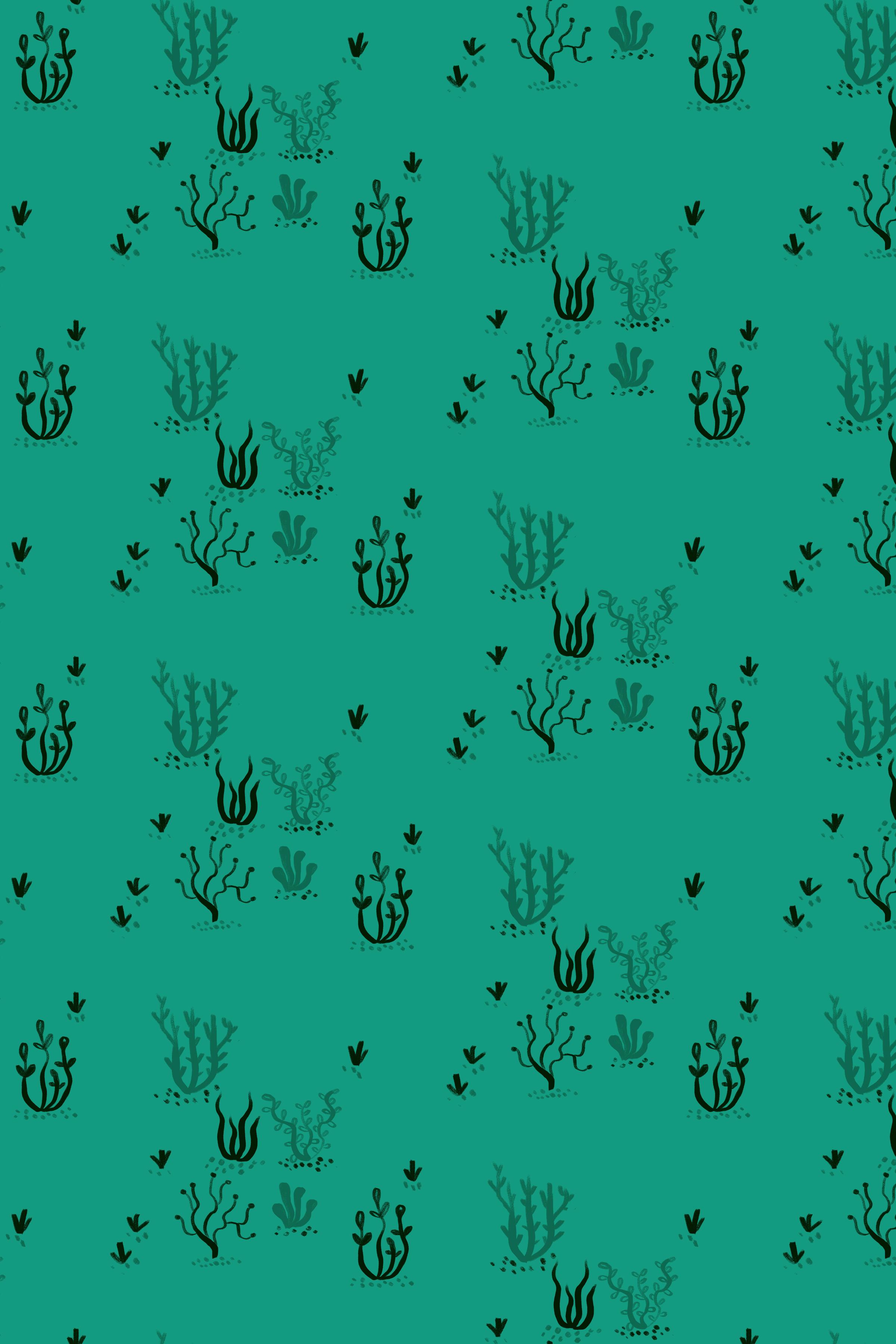 Seaweed DISPLAY CUT.jpg