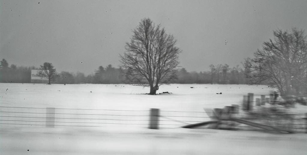 Winter Wonderland #4