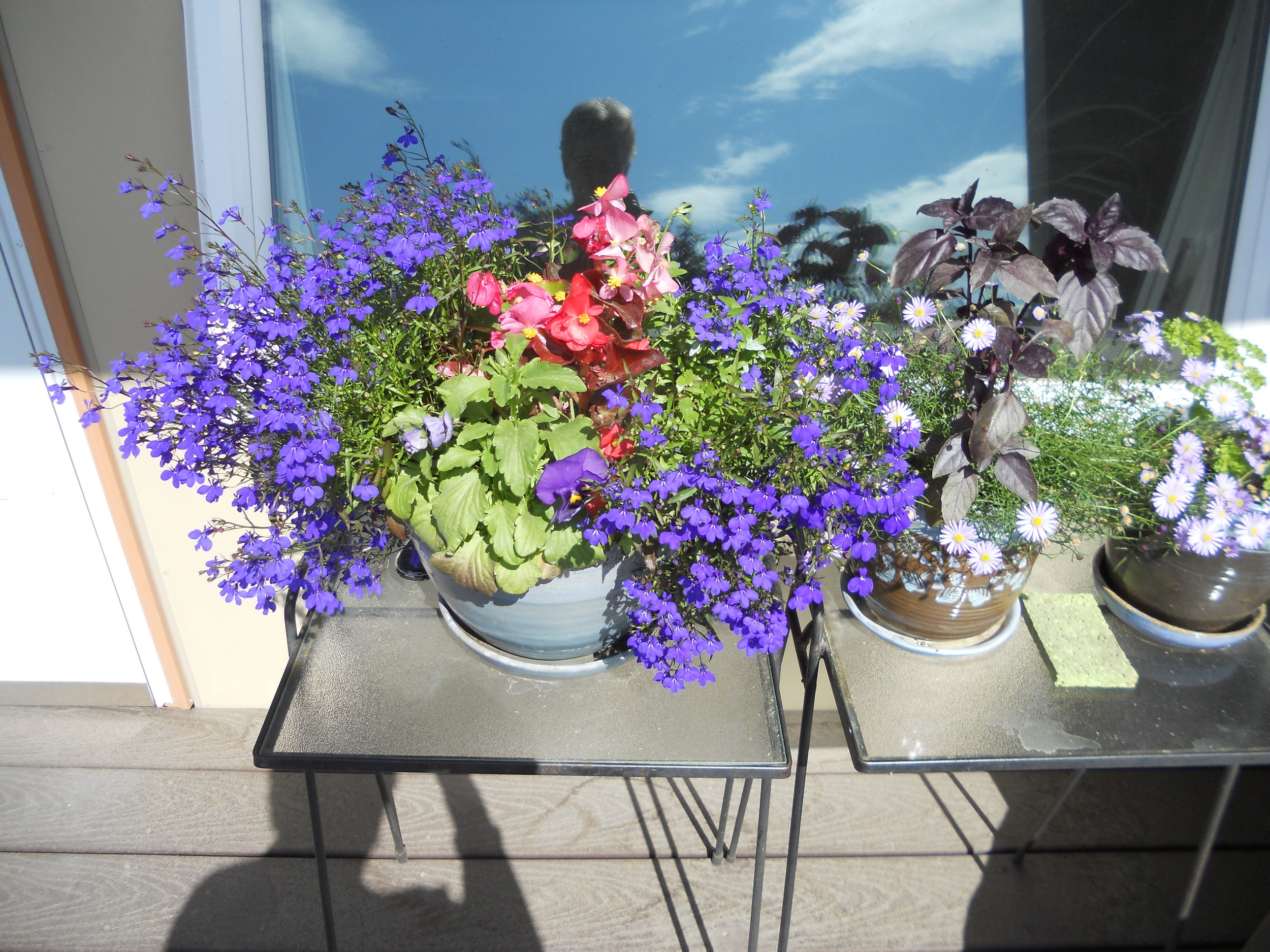 Flowers on balcony.jpg