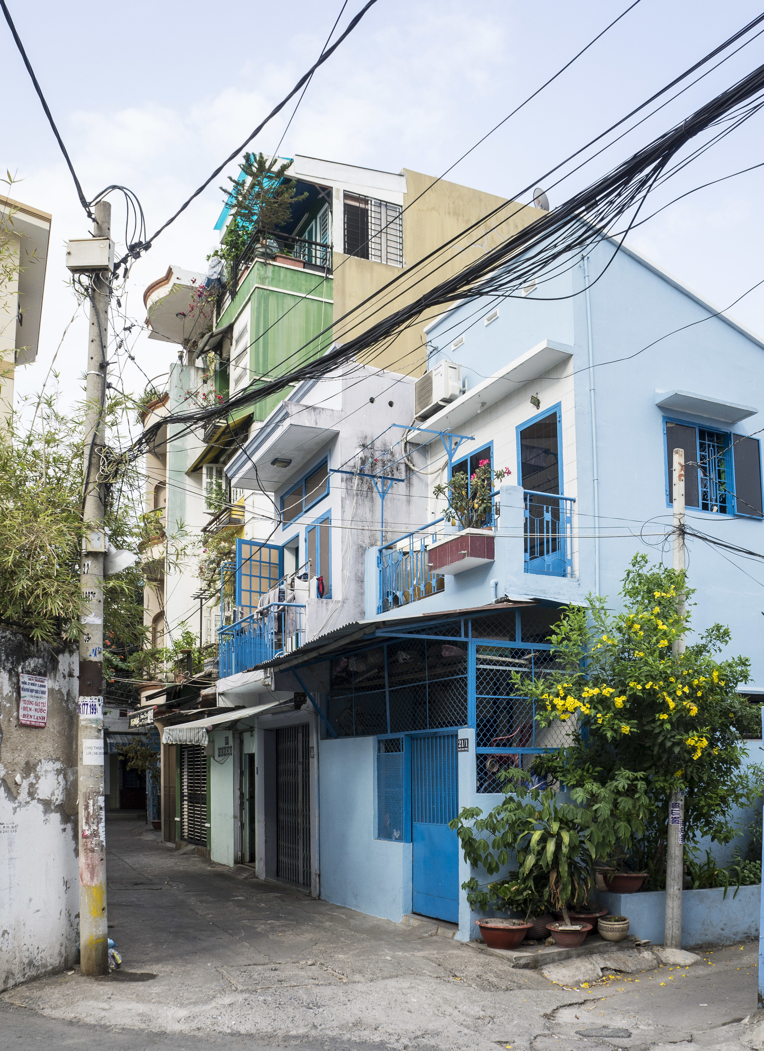 A cute blue corner house with aapricot tree in fullbloom. Saigon is all about yellow flowers during TET holiday.