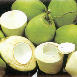 Coconuts come in many varieties, green and smooth or fuzzy and brown. In stores they are carved out like the bottom right.