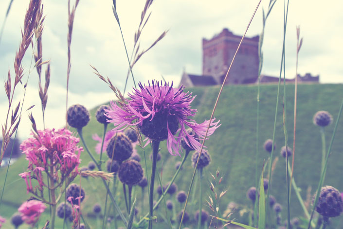 english_castles_dover_scottish_thistle_aspiringkennedy.jpg