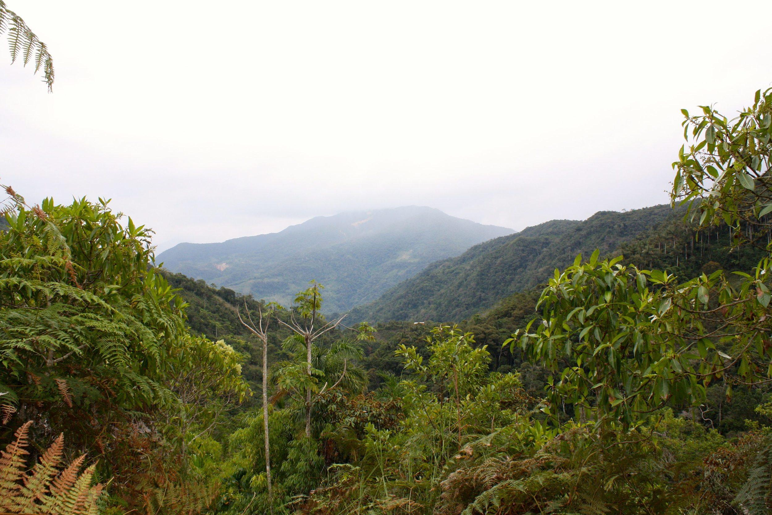 Coffee plantation overlooking the Sandia valley (Puno region, Peru)