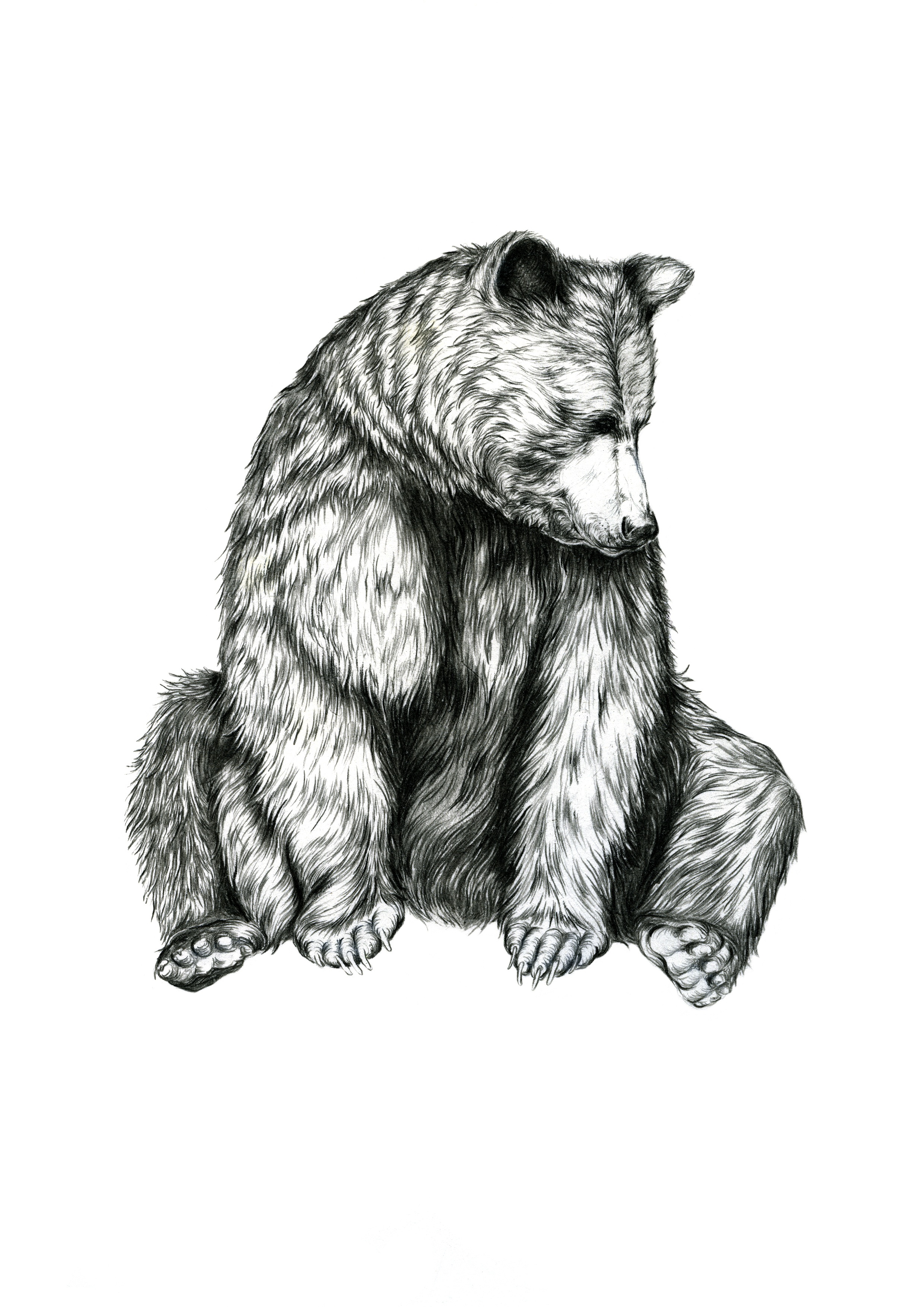 Bear2g.jpg