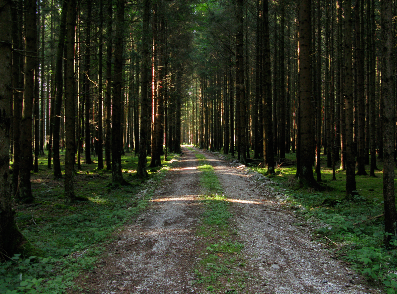james_to_lenka_road_06.jpg