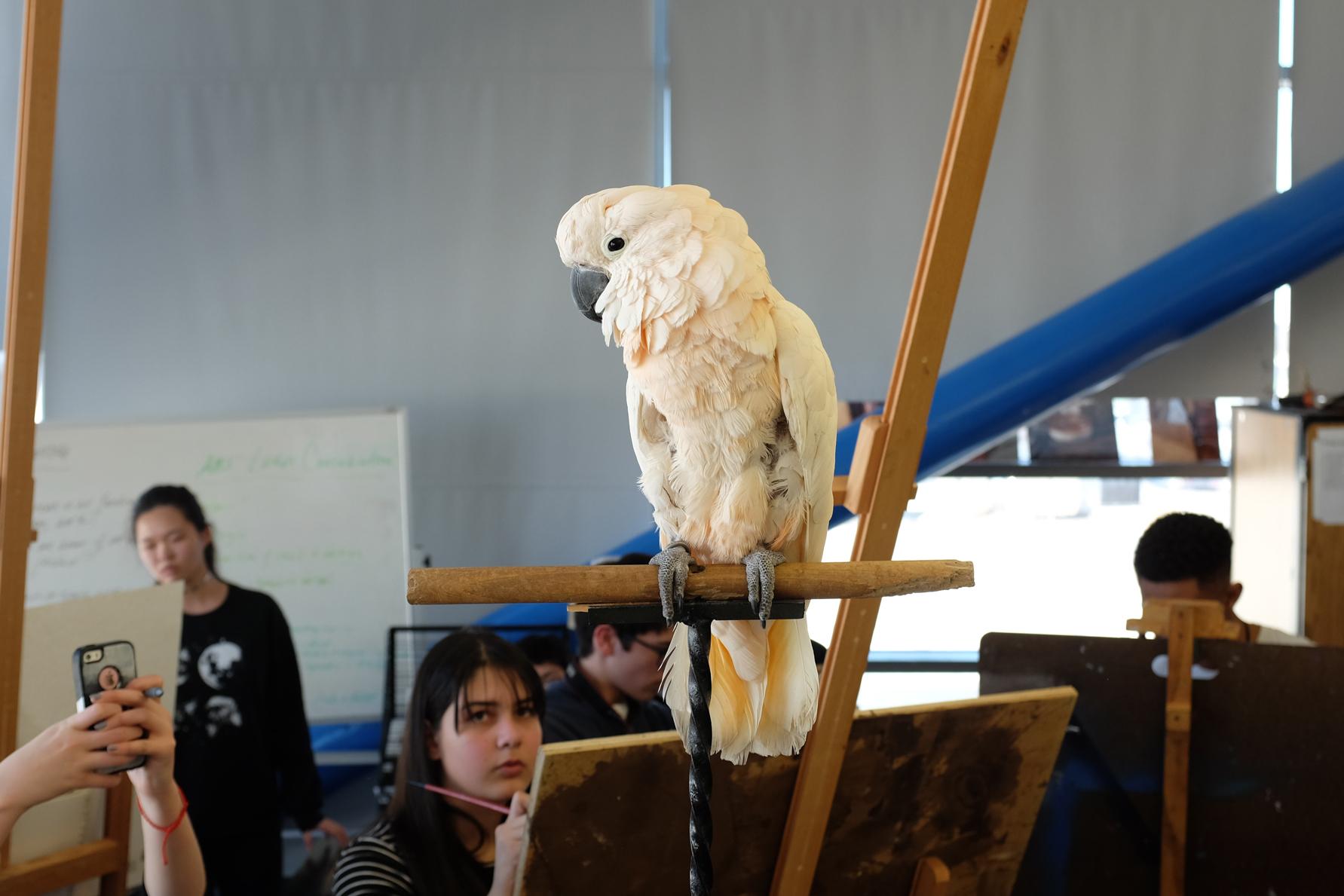 A Talking Parrot at a High School
