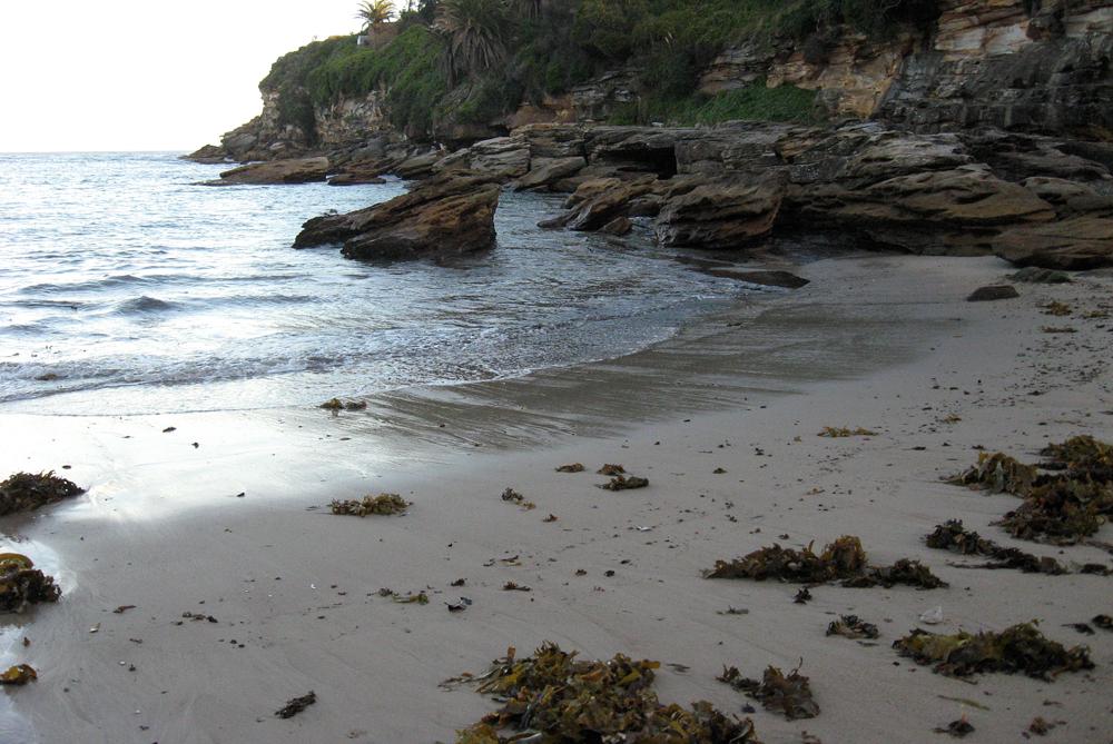 walking my own 'wrack line', Gordon's Bay, Sydney, May 2013.