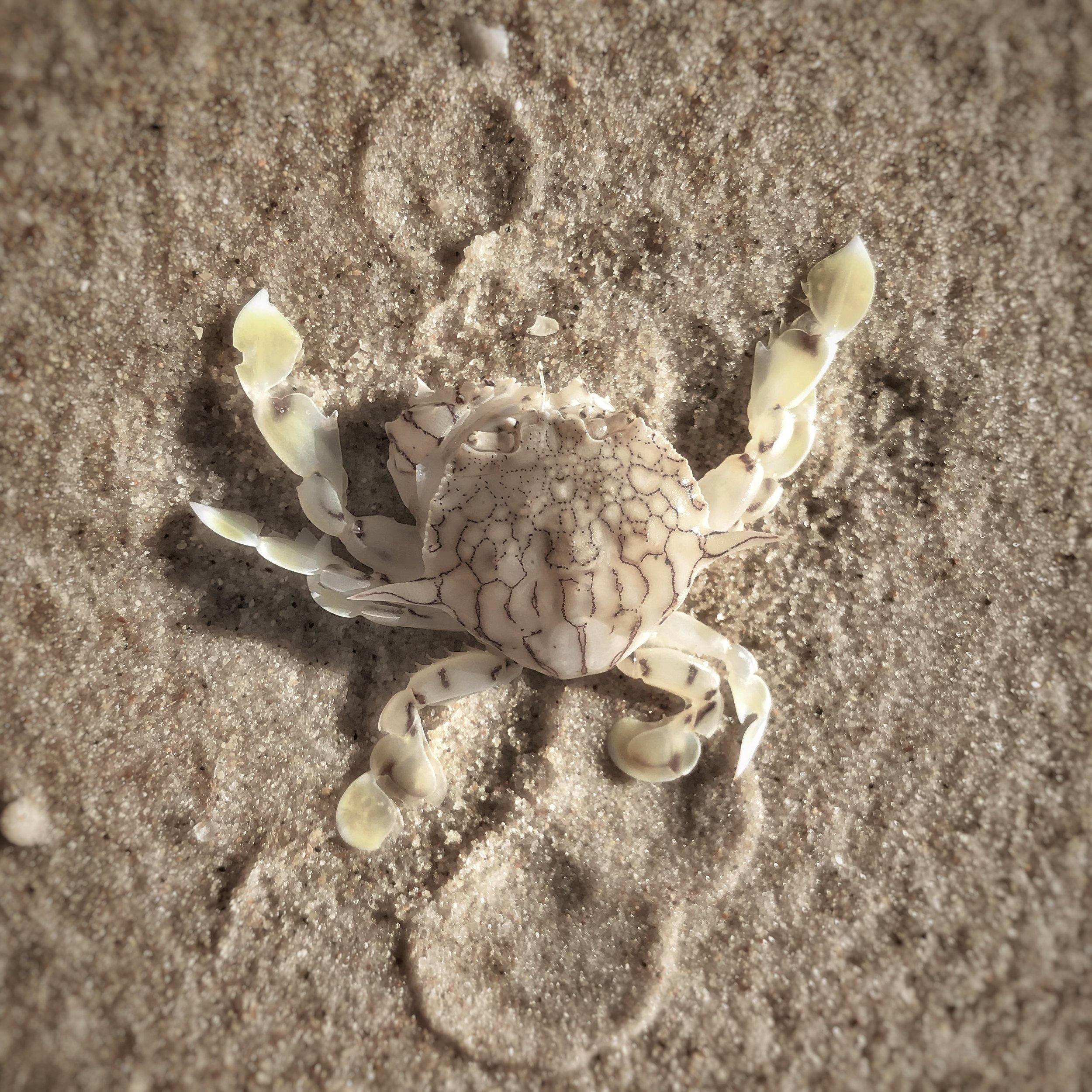 Porcelain on Sand
