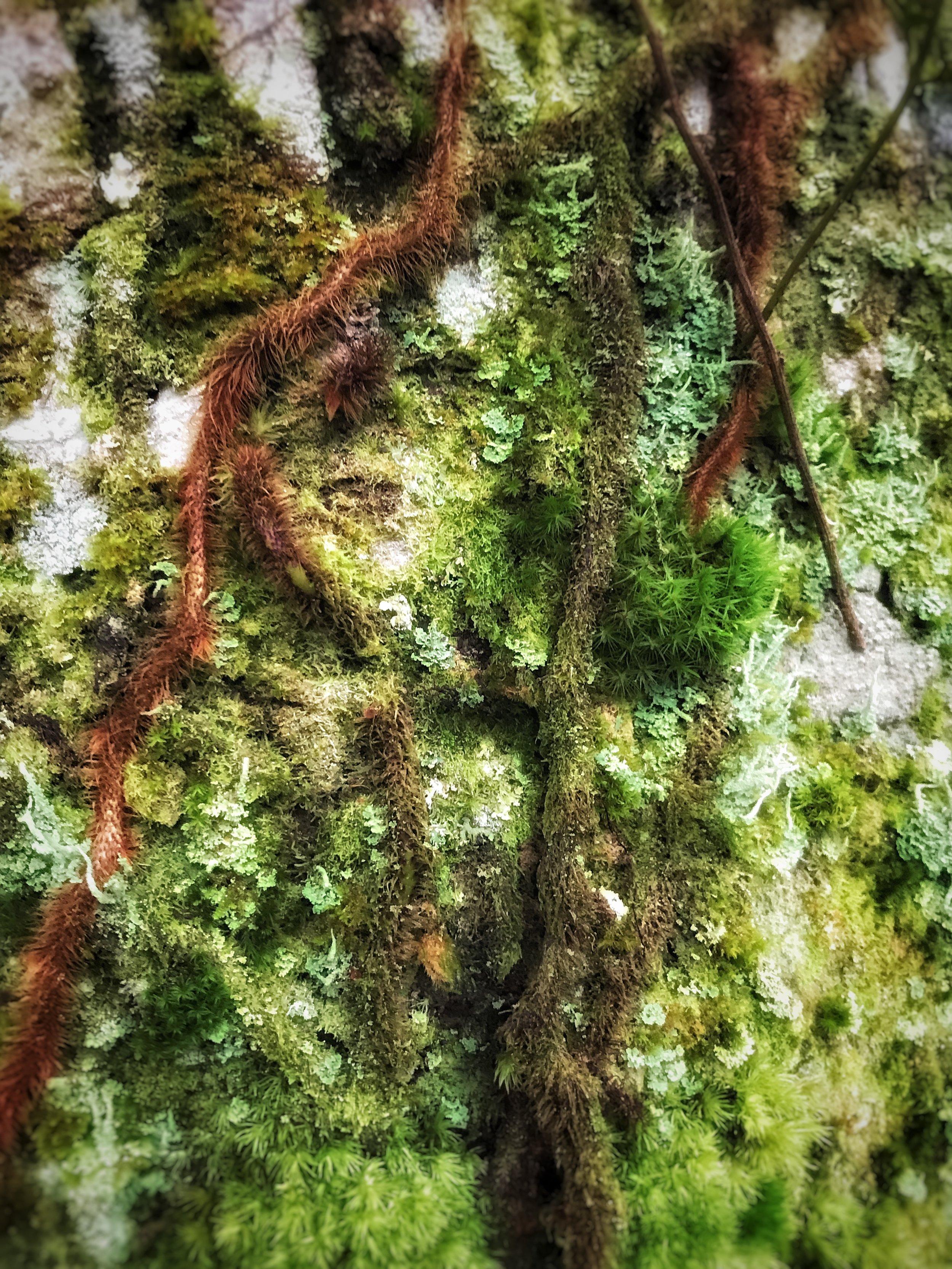Moss Story