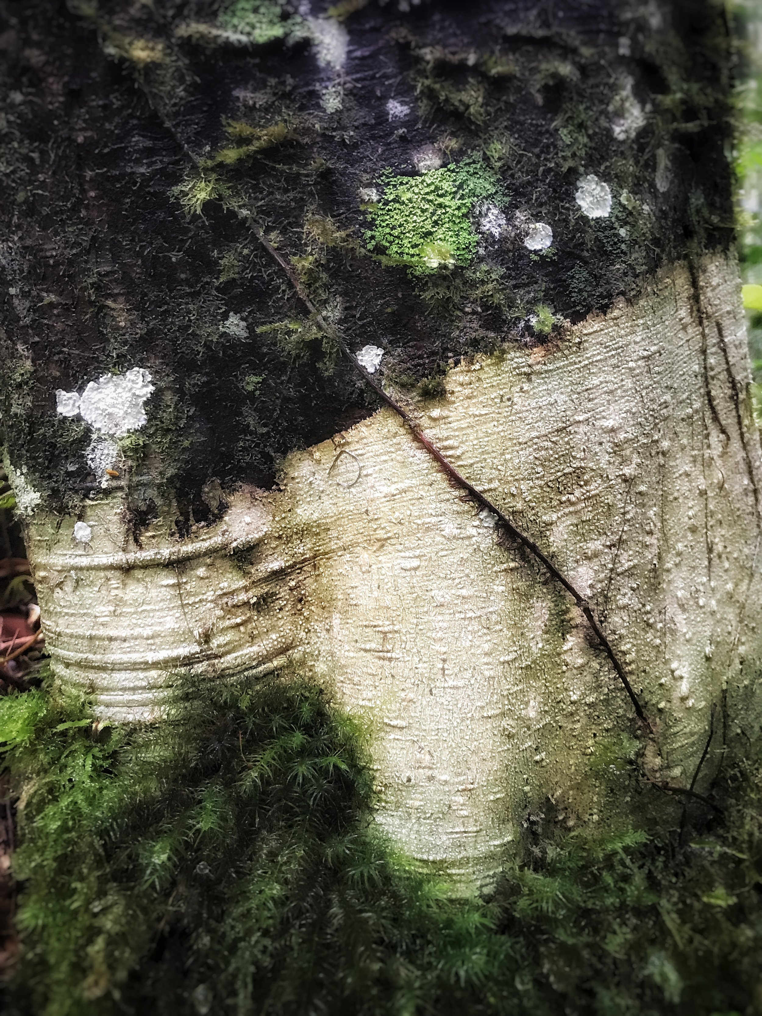 Tree Skin & Nerve