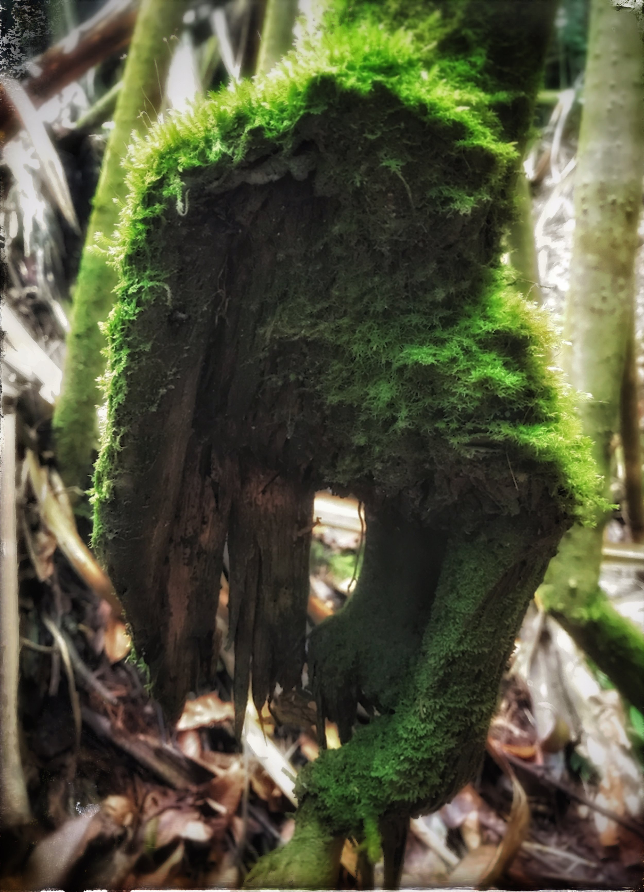 Green Hand of the Forest