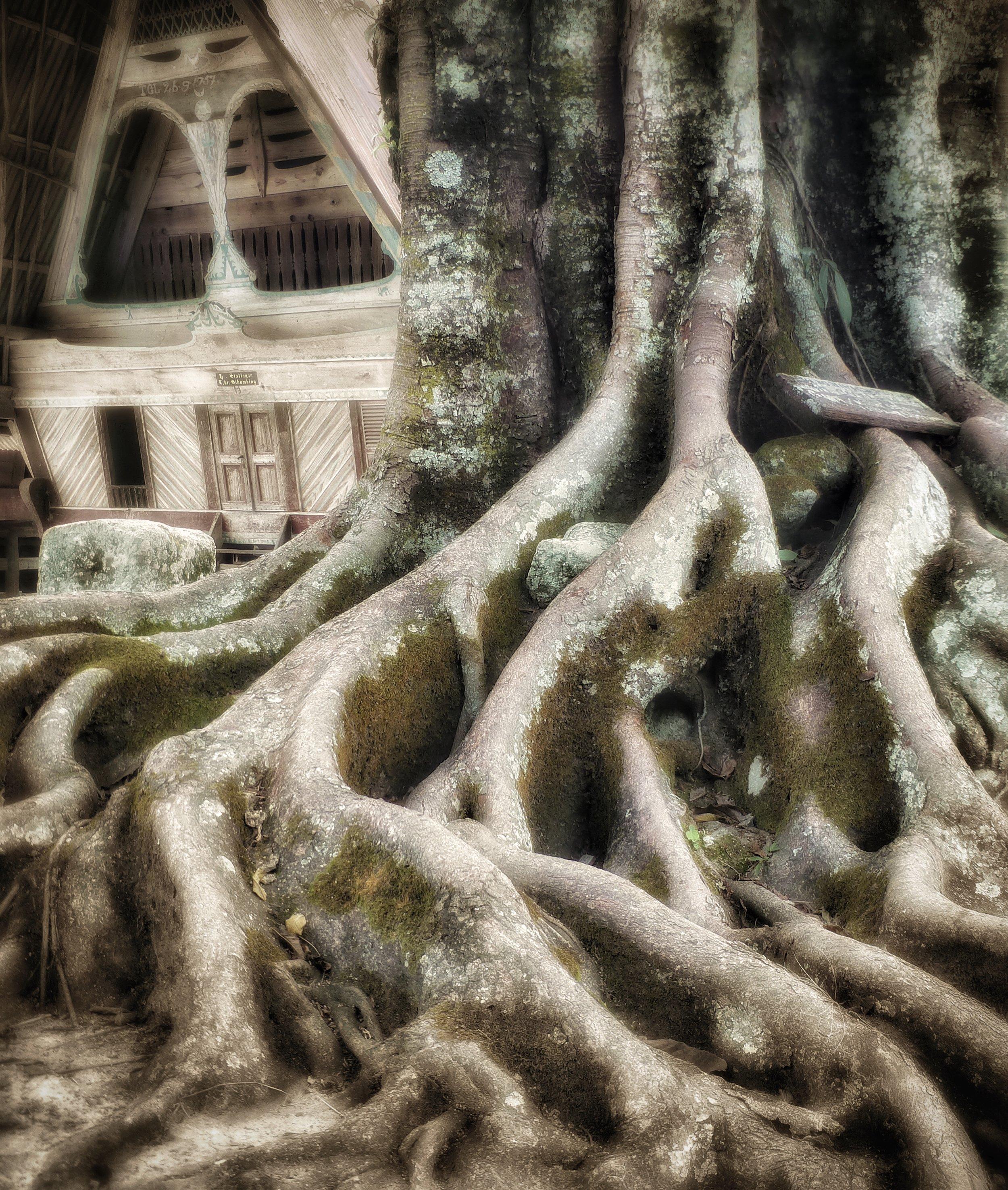 Fig Cascade
