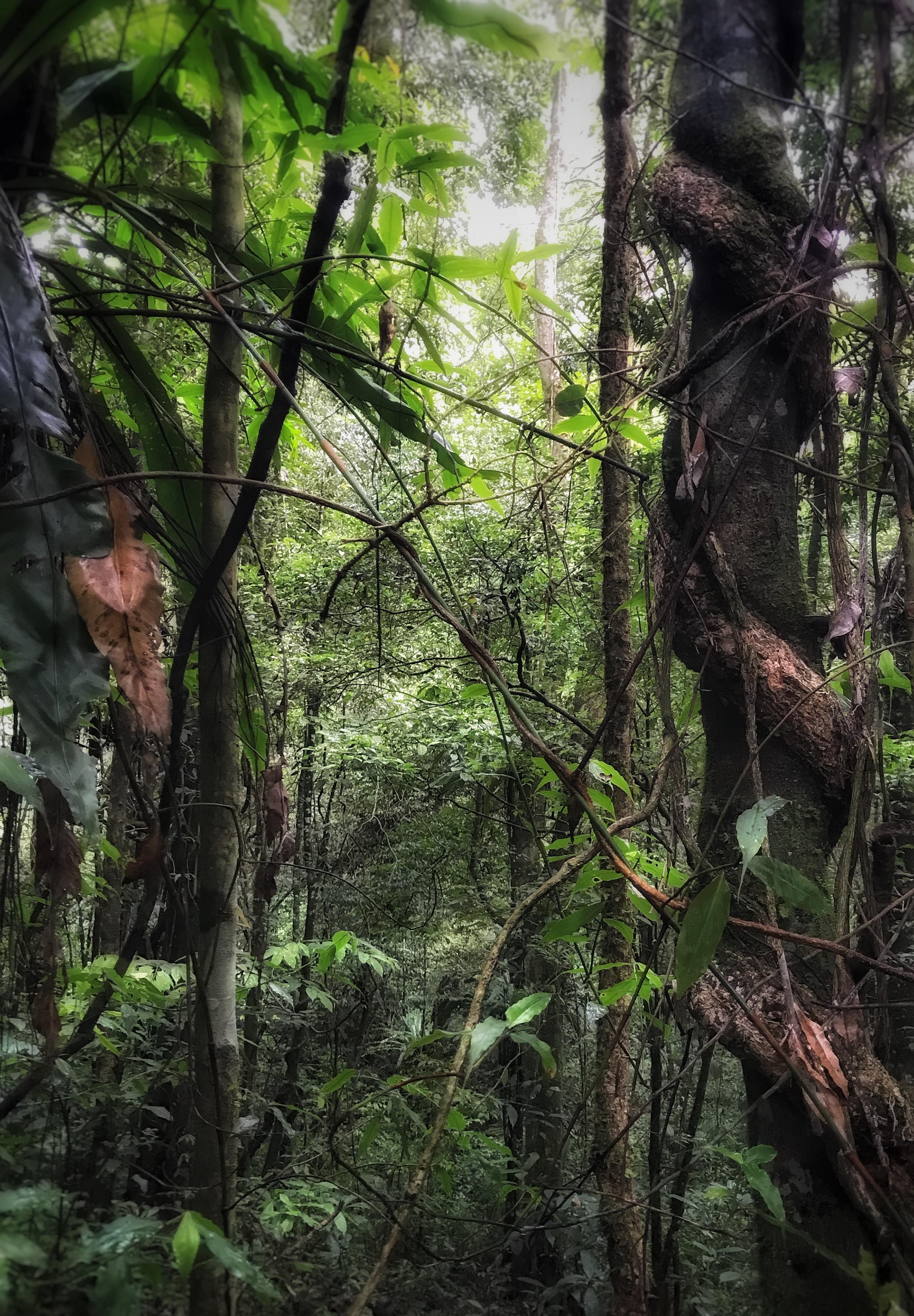 Spiral Jungle
