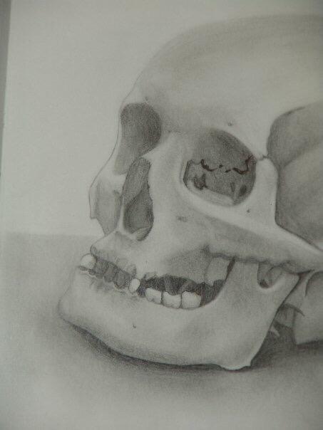 Sketches_Missy_Robbs_Skull.jpeg
