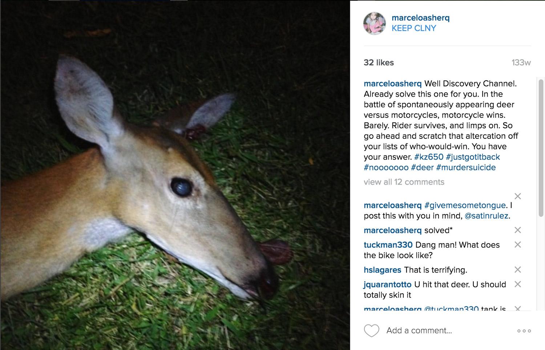 dead deer after Kawasaki KZ650 motorcycle crash