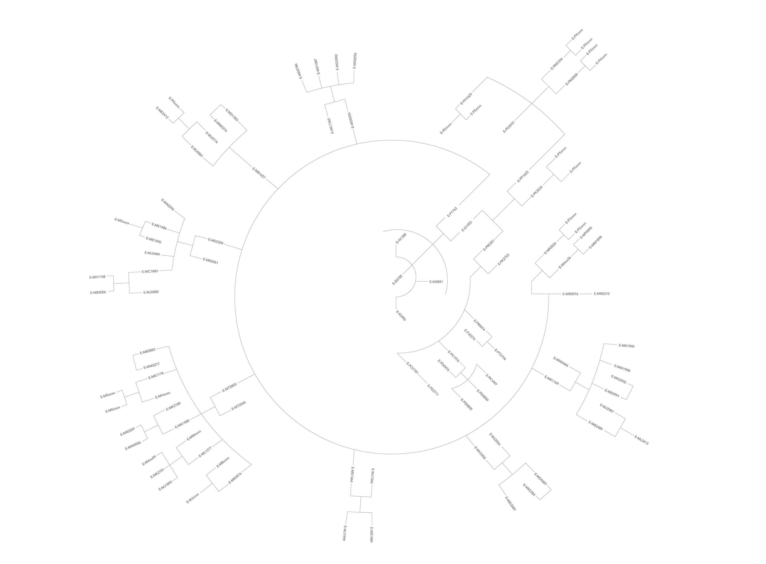 ACosmicLineage_Outlines.jpg