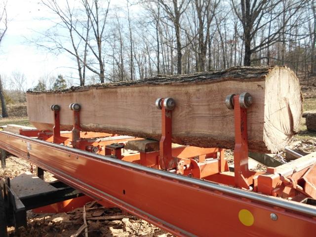 Nice red oak log on sawmill