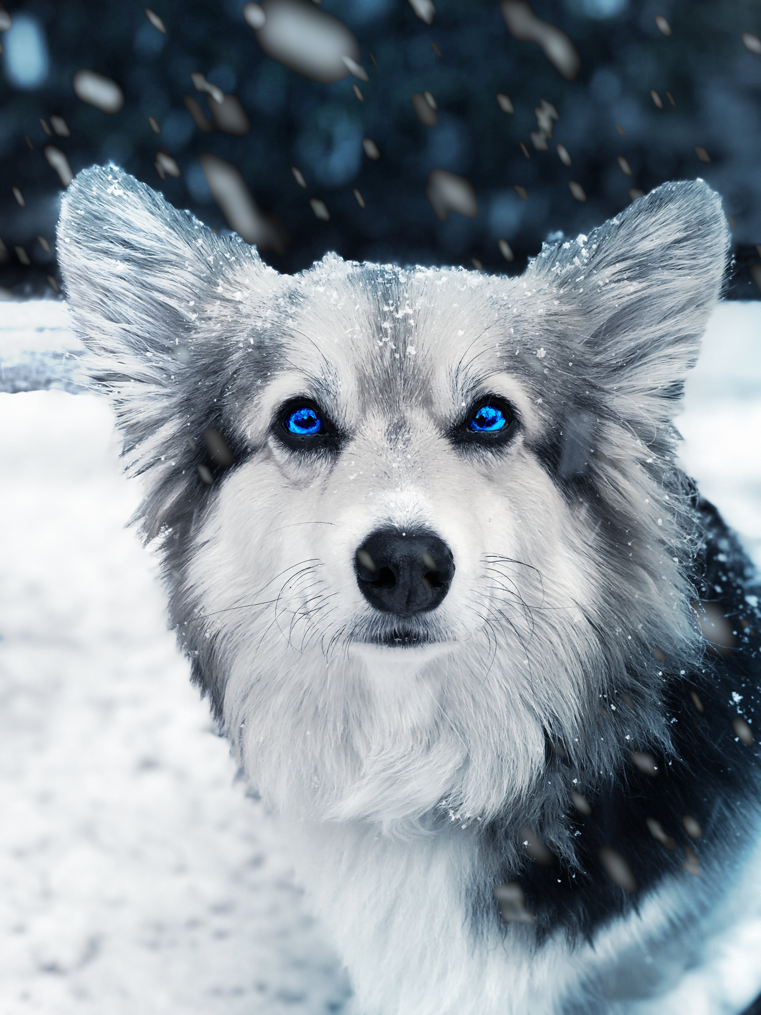 IMG-1737-whitewalker.jpg