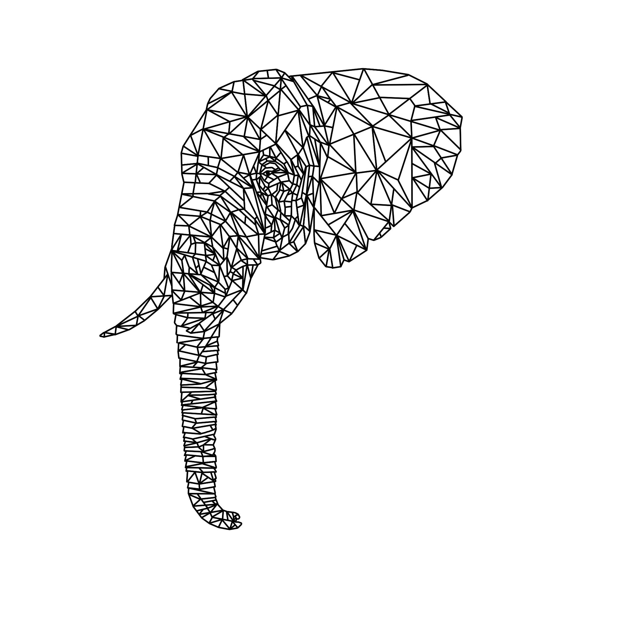 elephant black background.jpg