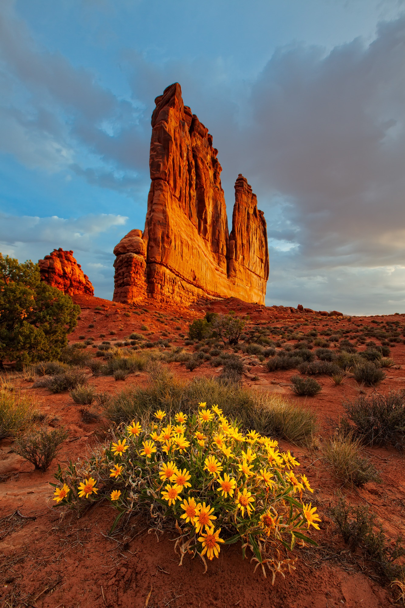 Mules Ear Wildflowers Blooming Below The Organ, Arches National Park, Utah