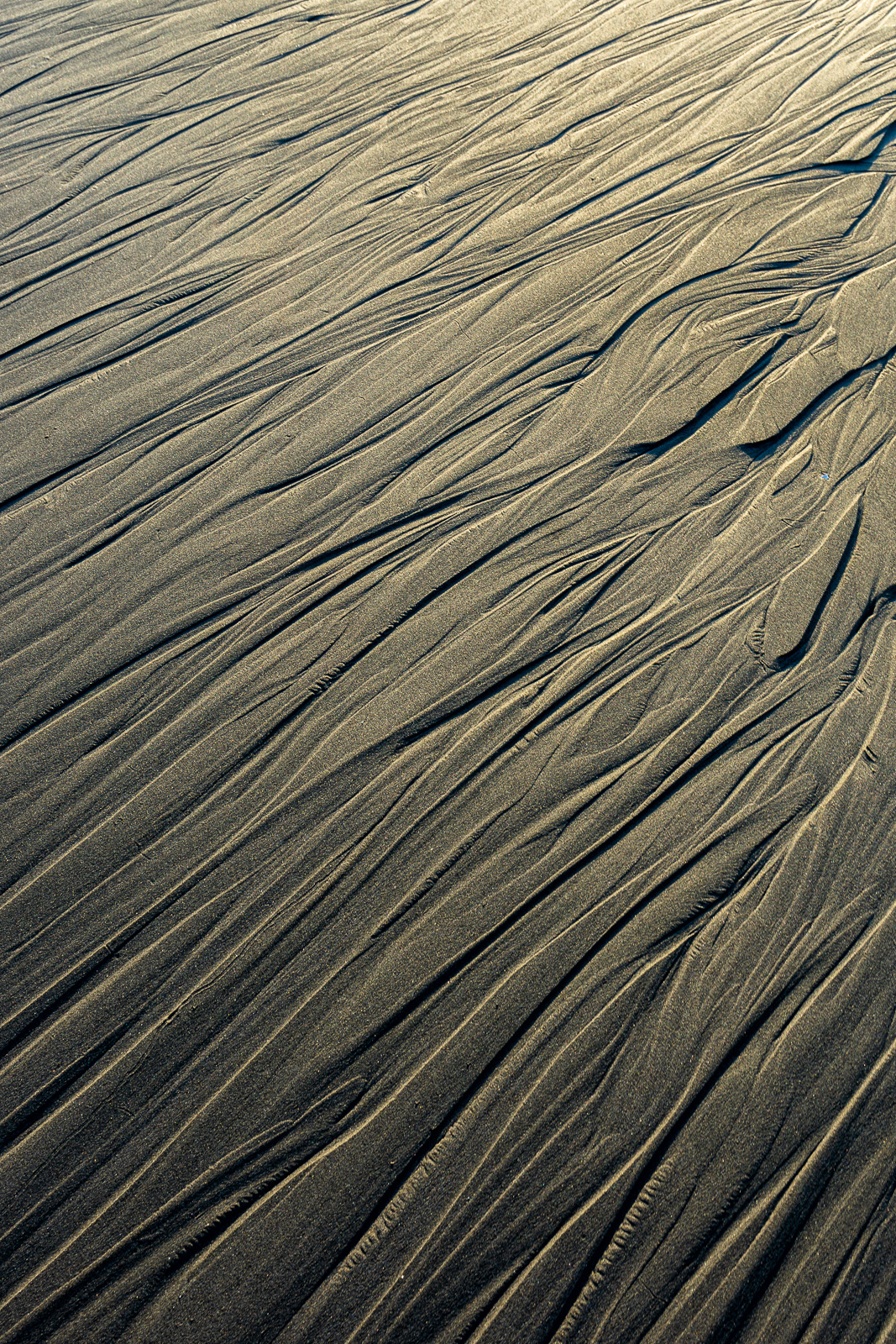 Golden sunset light reveals patterns and textures in wet beach sand on a secluded beach along the Oregon Coast.