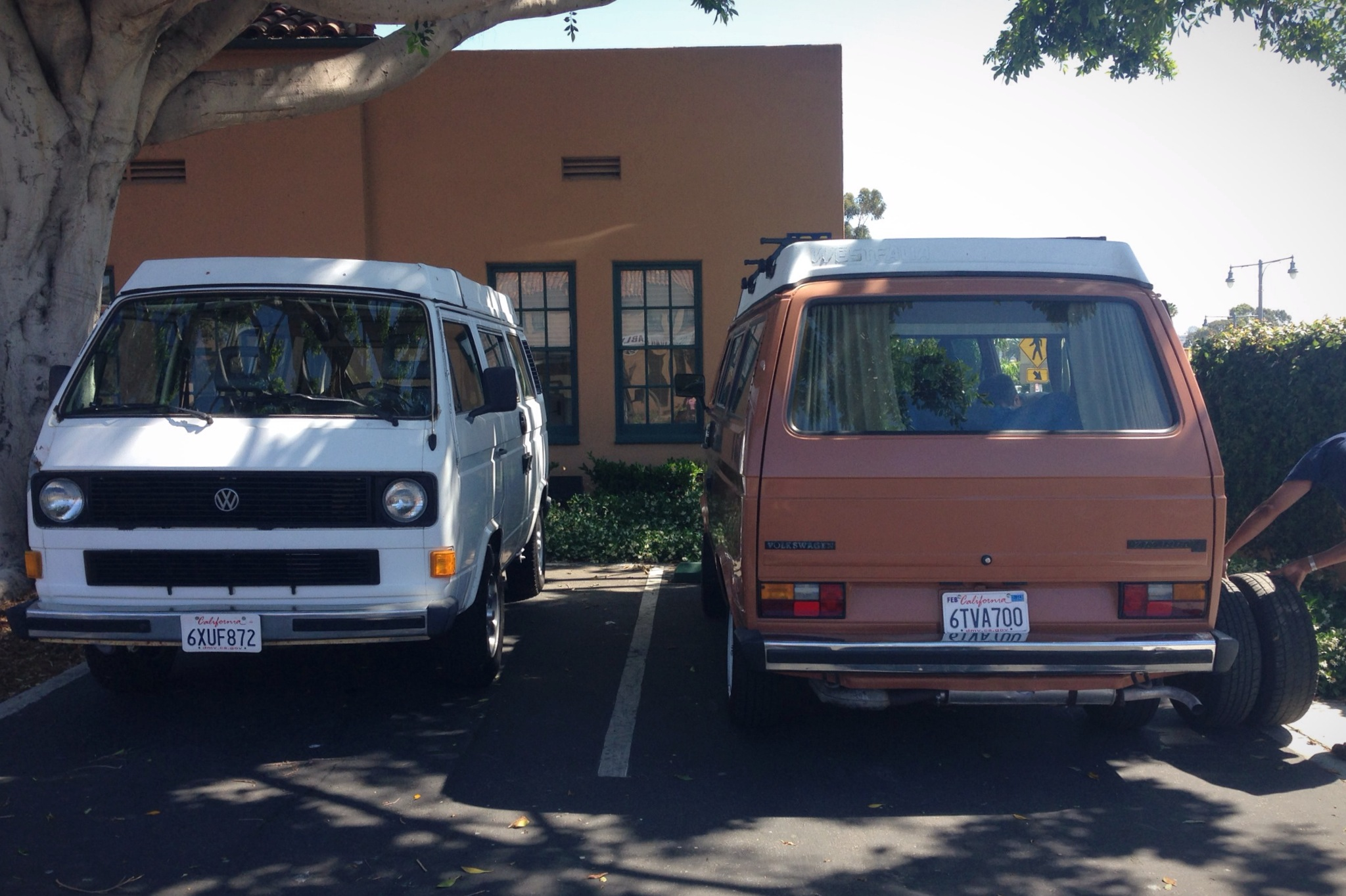 Our Westy's first friend.