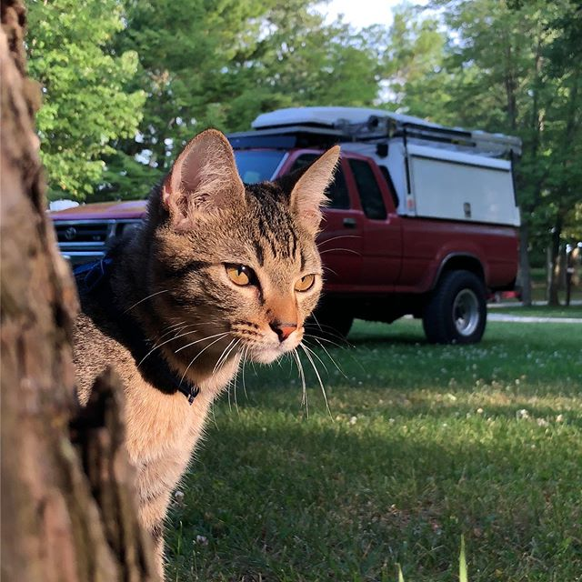 Pretty sure that Rocket is either contemplating the massive road trip he's about to take, or working on his blue steel. 🐈 • Photo by @jacquienfuego  Kitty is @roamingrocket • • • • • • • #adventurcat #kitten #catsofinstagram #fulltimerv #overlandcat #tabbycat #tabby #tabbycats #rvcat #vancat