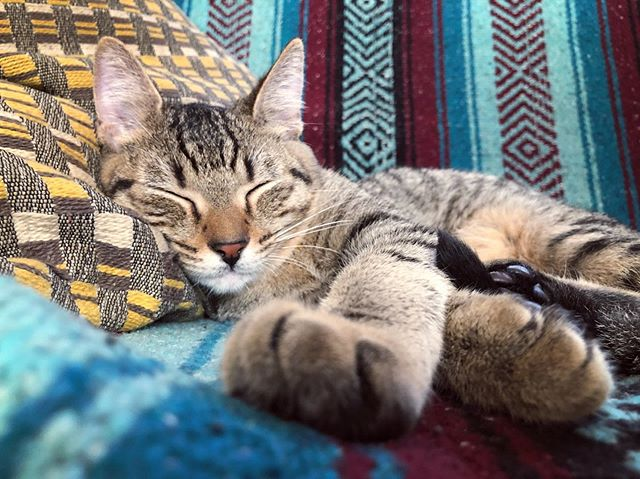 No one naps like this guy... I guess they call it a cat nap for a reason 💤💙 . #adventurecat #catsofinstagram #roamingrocket #rvcat #fulltimerv #kitten #snoozefest