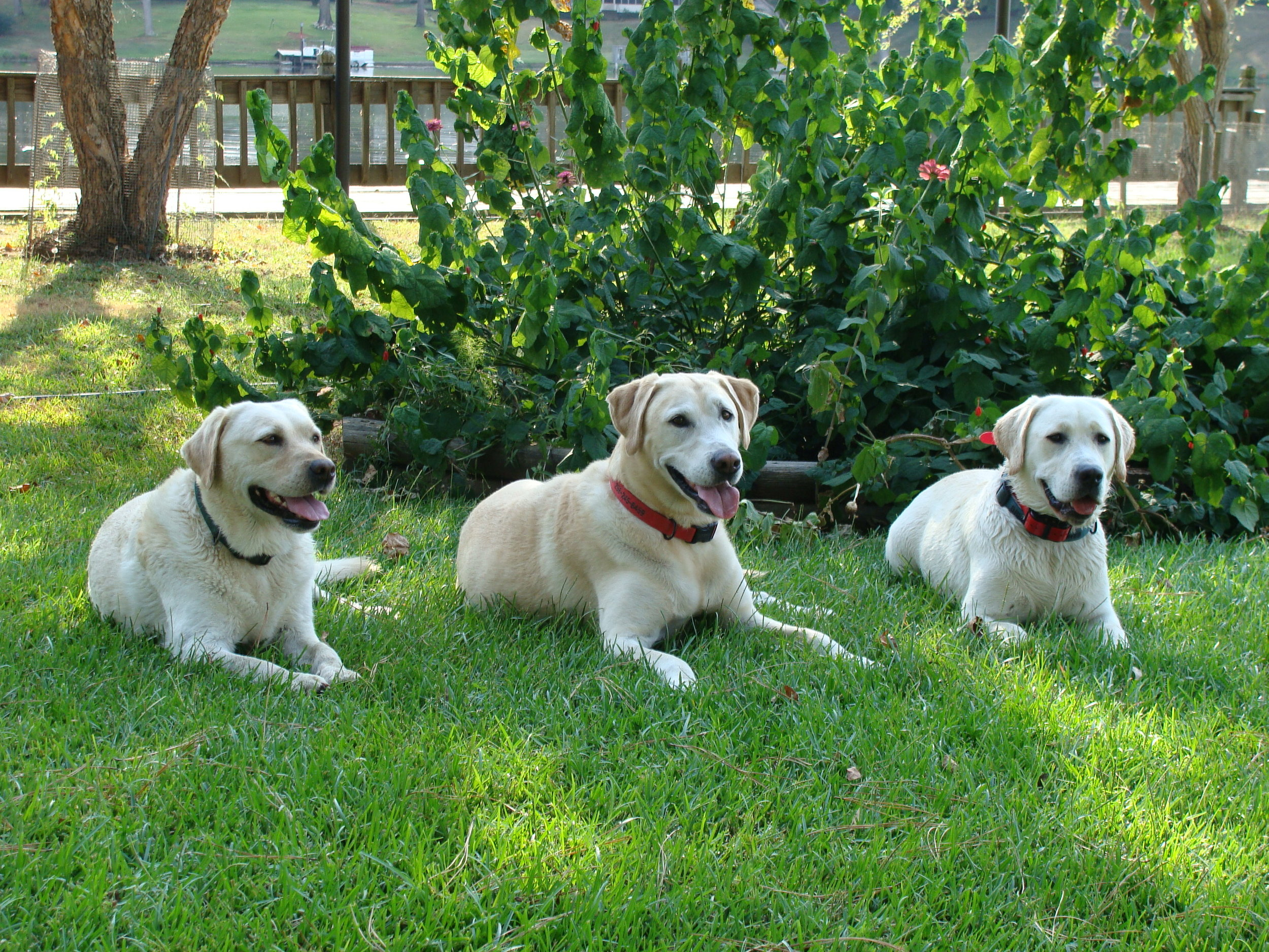Left to right:   Skipper, Schooner, Brigan