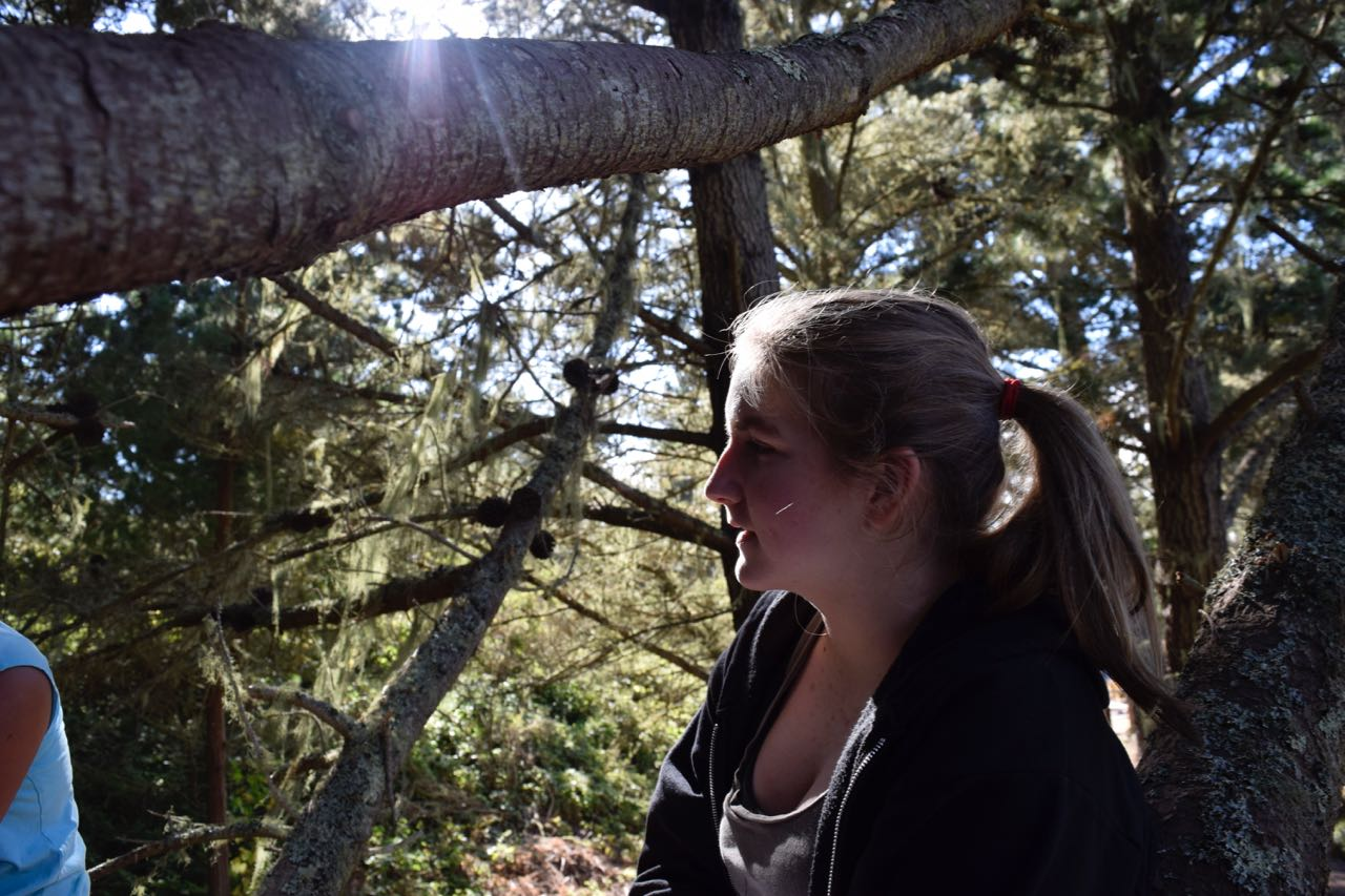 Portrait of a tinkerer, Sarah P., collaborating in a tree.