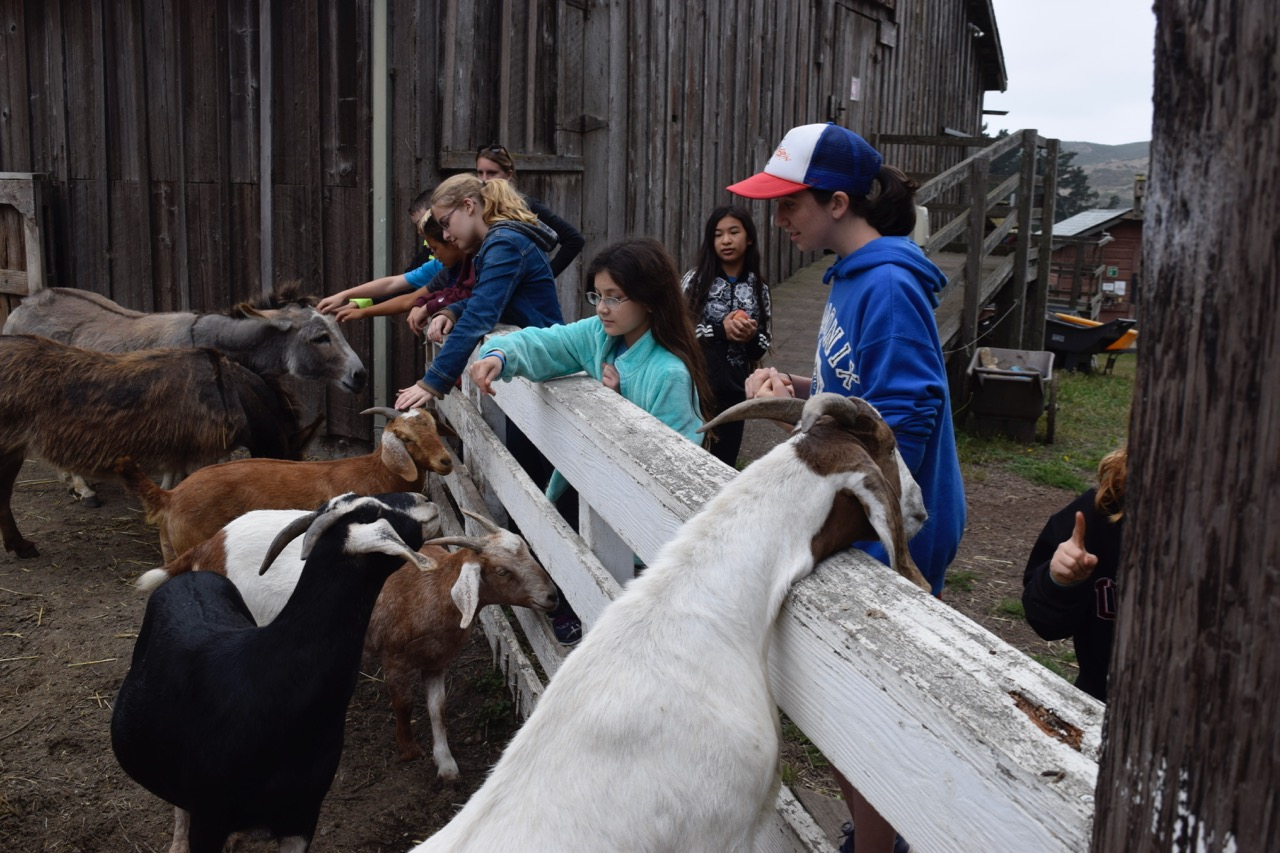 The goats are eager to see us.