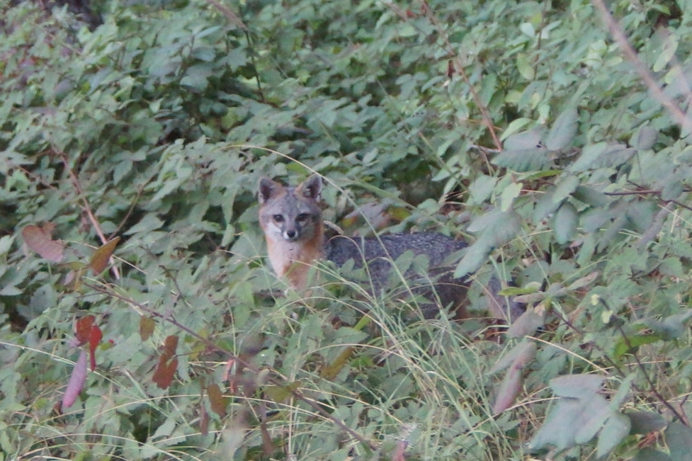 I saw a fox while the campers were exploring the forrest and playing on the swings.