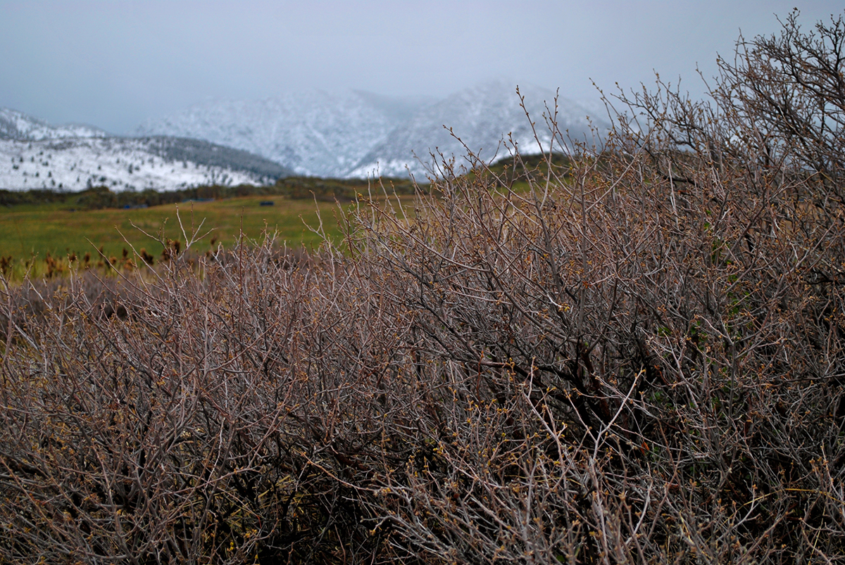 Heather Wyancko Photorgaphy, Foothill Brambles of the Colorado Rockies