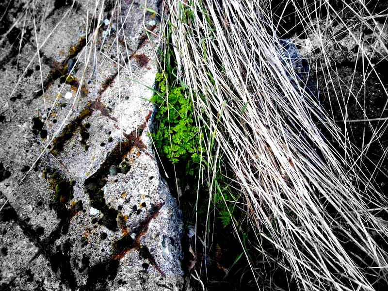 Green among Cement and Weeds