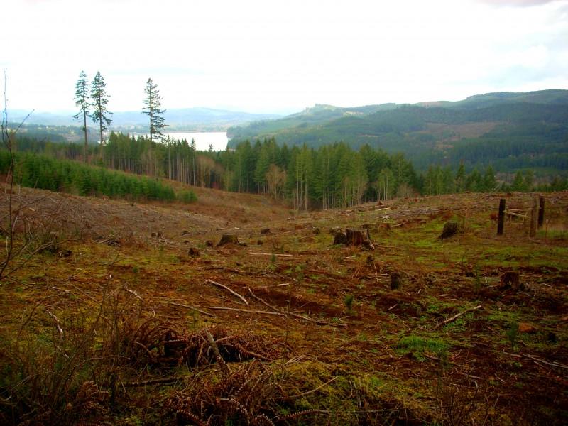 Little Logging Town