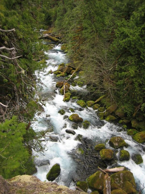 Pristine Stream