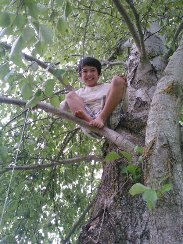 Climbing the Tree of a Healthy Life
