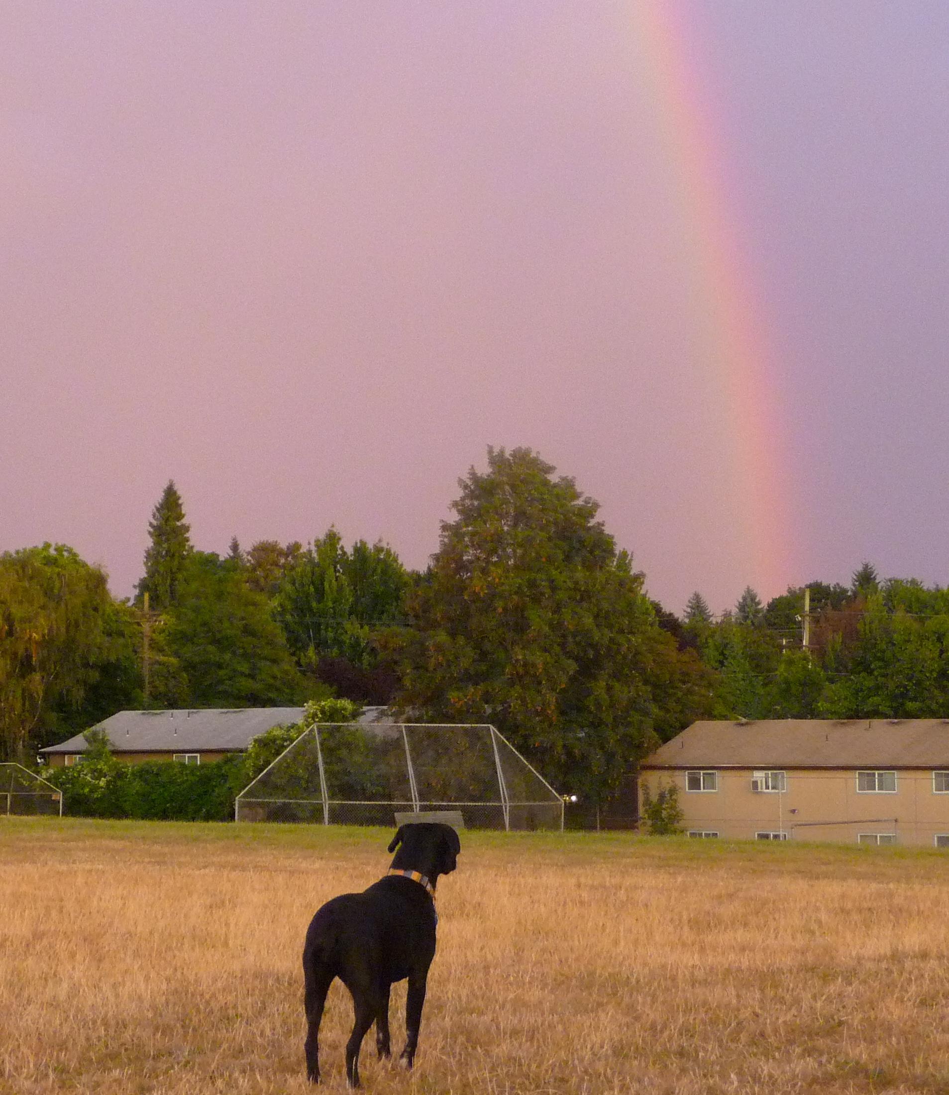 Summer's Rainbow