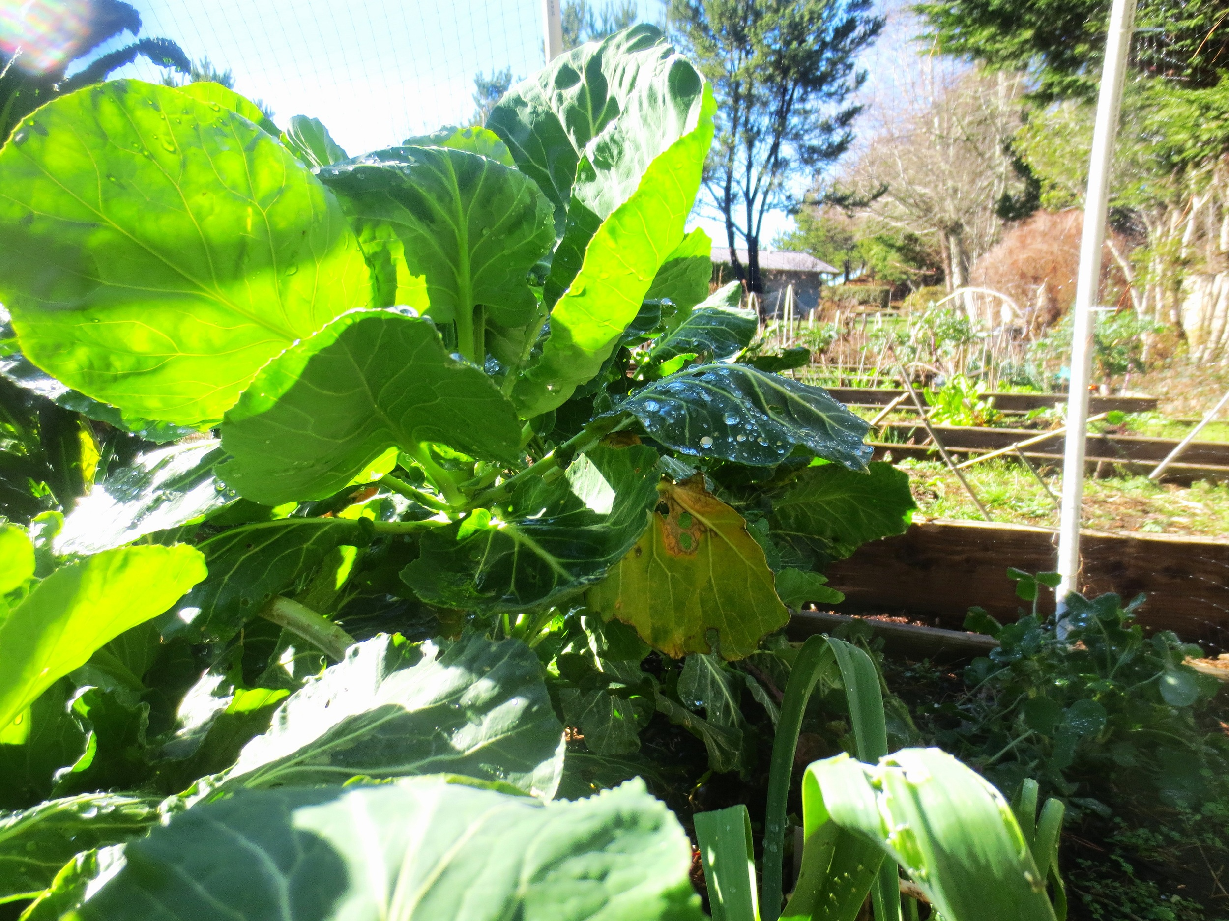 Raised Beds in Winter – Community Garden
