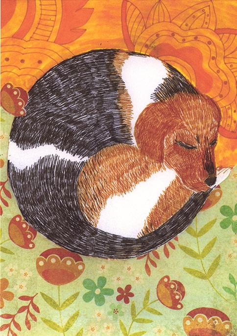 Curled Up Beagle