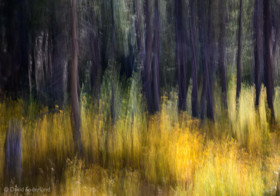 Forest Edge.jpg