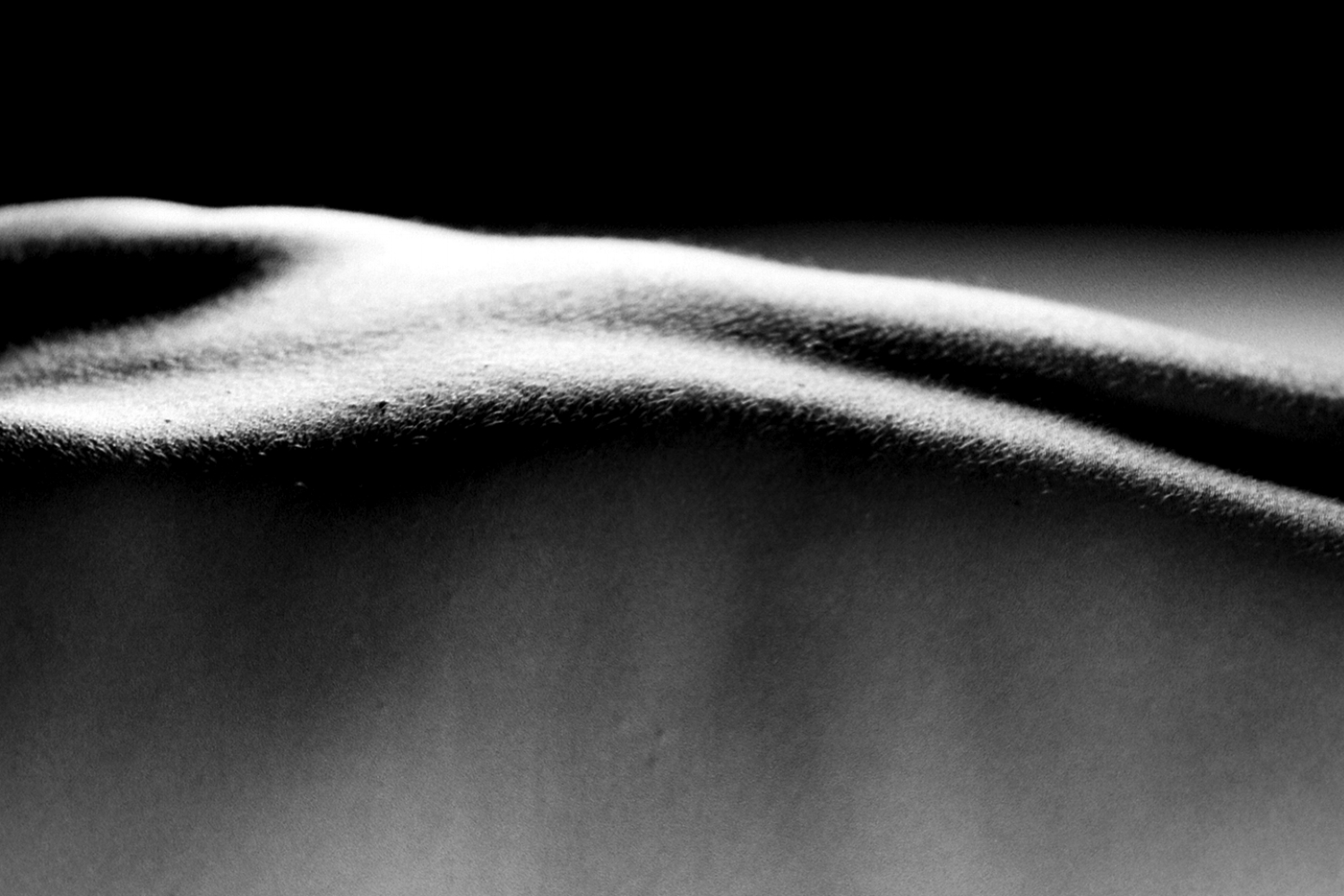 BODYSCAPES (2012)