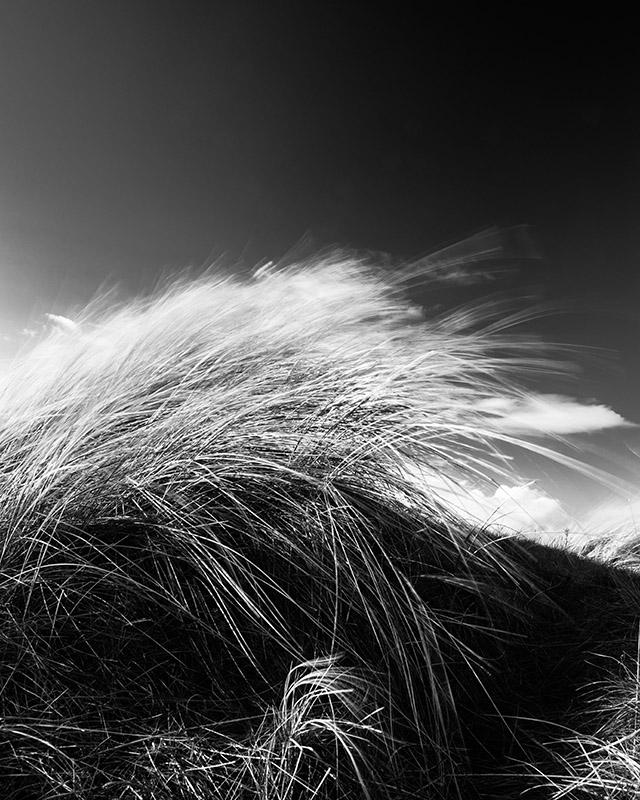 Dune grass at Sands beach