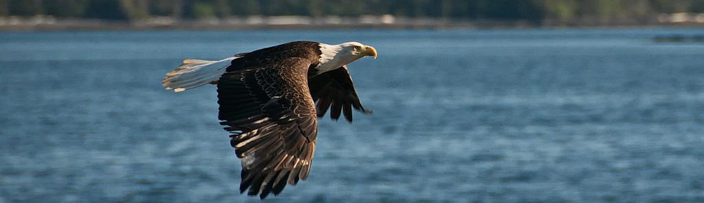 eagleMap3.jpg