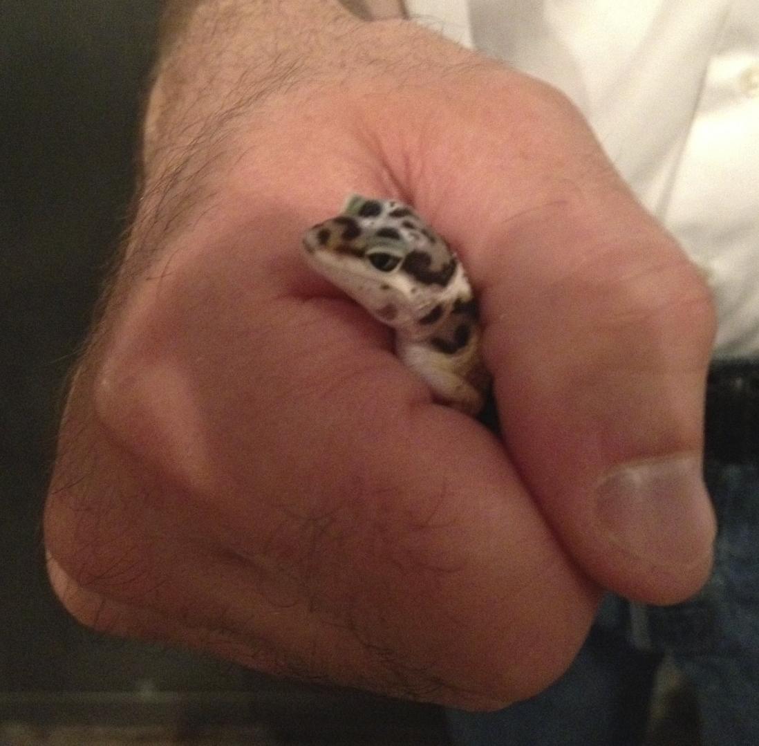 Matt holding a young leopard gecko