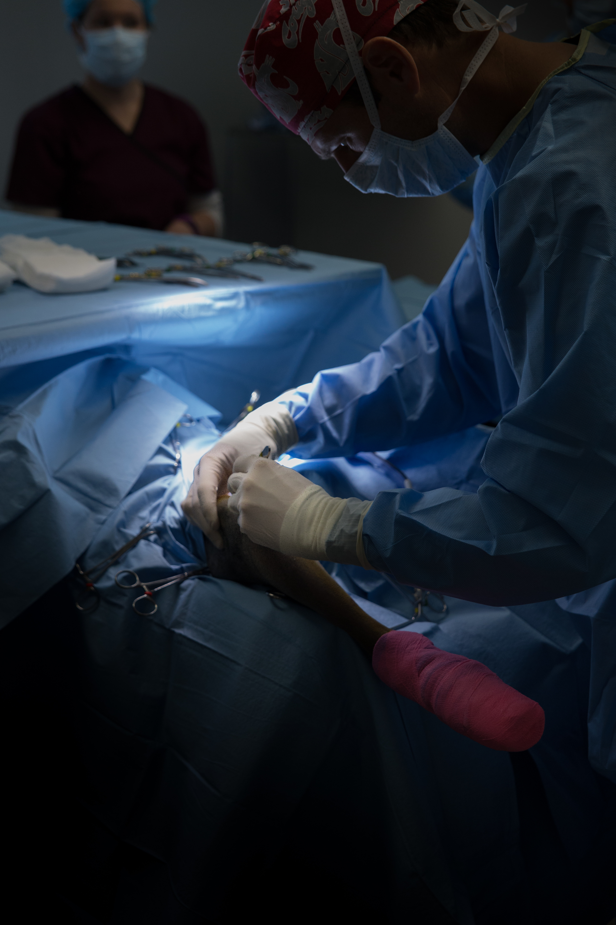 Dr. Newton making the initial incision. The surgical field is very well draped for sterile protection. Even the portions of the patient are wrapped in sterile material to ensure complete protection.