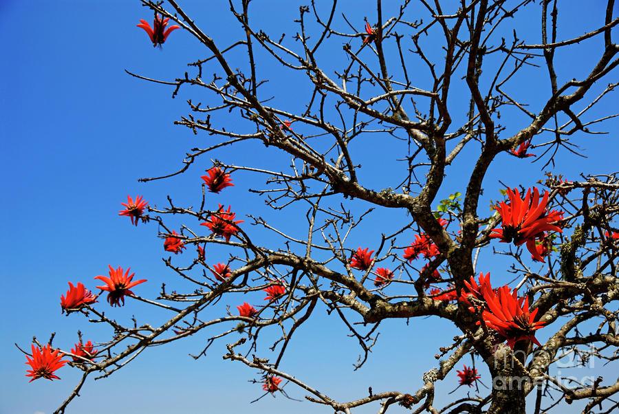 tree-in-bloom.jpg